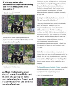 A Photographer Who Discovered Baby Bears Dancing In The Forest Thought He Was Imagining It