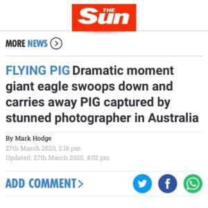 """""""Yea, whenever pigs fly goyim!"""" #TheGreatAwakening…"""