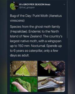 2 [New] Bug of the Days Via @itsallmostmidnight #GroyperSeason…