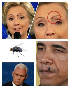 FLYGATE:  see previous post.This can work both ways. A fly being present with