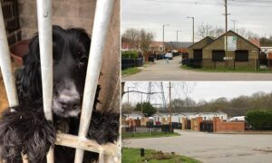 Police seize 83 dogs and arrest six people during raid on suspected puppy-steali