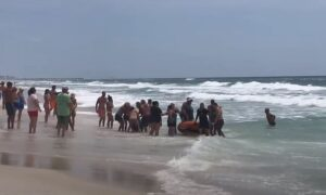 Florida beachgoers form a massive human chain as they scrambled to save little g