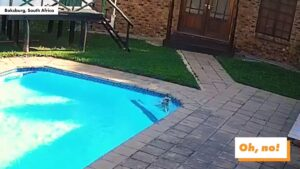 Read more about the article Dog saves fellow dog from drowning in pool