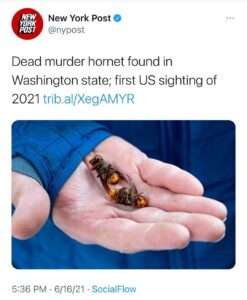 First sighting of 2021 and they're dead. Remember how they used the threat of t