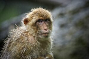 Read more about the article On July 16, #China reported the first #MonkeyBVirus death in its history.  The i