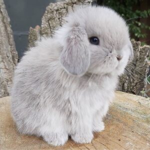 Read more about the article How is everybunny's day going?