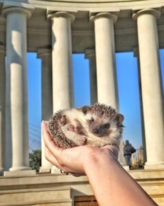 Read more about the article HH to Hold Hedgehog